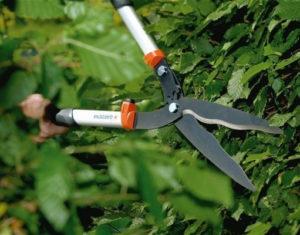 Как выбрать ножницы для живой изгороди и какие лучше